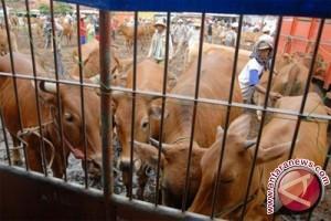 Impor Daging India Dikhawatirkan Mematikan Usaha Peternakan Rakyat