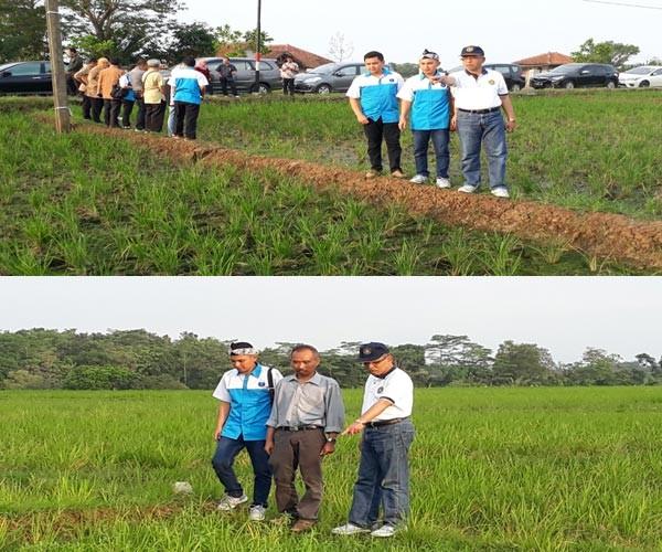 IPB Dampingi Petani Terdampak Wereng Di Subang