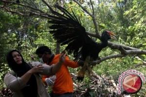Ratusan Burung Dilepasliarkan di Taman Hutan Rakyat Dago