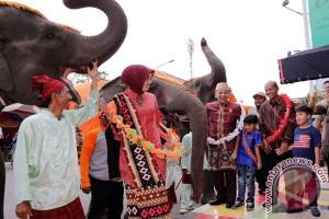 Parade Gajah Di Festival Way Kambas Lampung