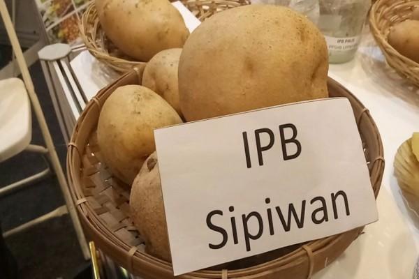 Kentang Sipiwan Meraih Anugerah Komersialisasi Inovasi IPB