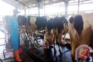 Pemerintah dorong kemitraan tingkatkan produksi susu nasional
