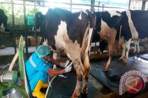 Menanti Bangkitnya Usaha Ternak Susu Nasional (1)