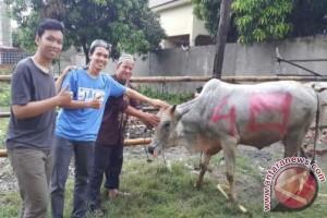 Tim Banana Pirates IPB 'Bawa' Sapi ke Minoritas Muslim Kamboja
