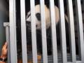 GIANT PANDA TSI BOGOR