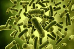 IPB Teliti Bakteri Pada Bekasam Ikan Mas