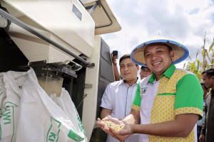 Lampung Kembali Berjaya Dalam Memroduksi Jagung