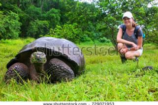 Kamboja temukan sarang 'Kura-kura kerajaan'