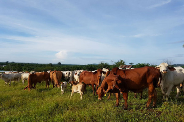 Peneliti IPB petakan potensi wilayah pengembangan peternakan di Tasikmalaya