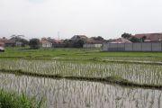 Pemberian bakteri tingkatkan ketersediaan nitrogen di tanah