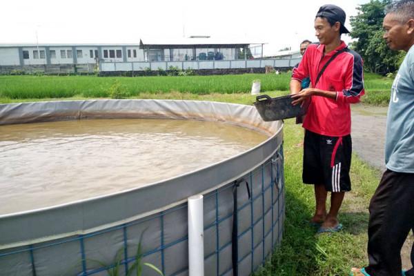 Biogan Memperbaki Sistem Bioflok Lele