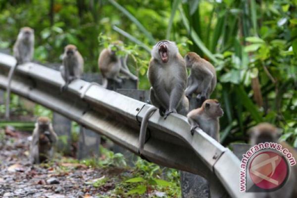 Gawat, Ada monyet ngamuk di gedug strategis India