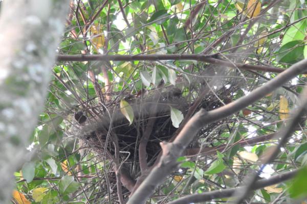 Unik, mahasiswa IPB jadikan sarang burung sebagai indikator kualitas lingkungan