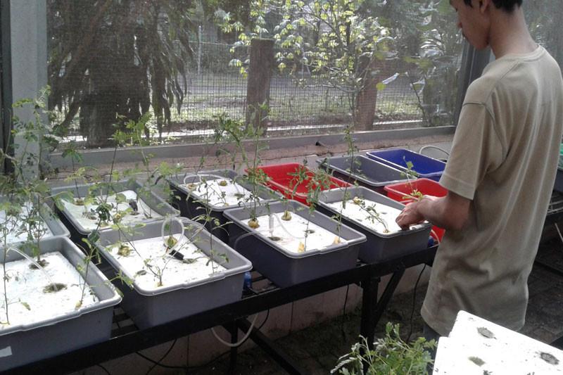 Penelitian mahasiswa IPB simpulkan meniran bisa serap unsur logam pada lahan tambang