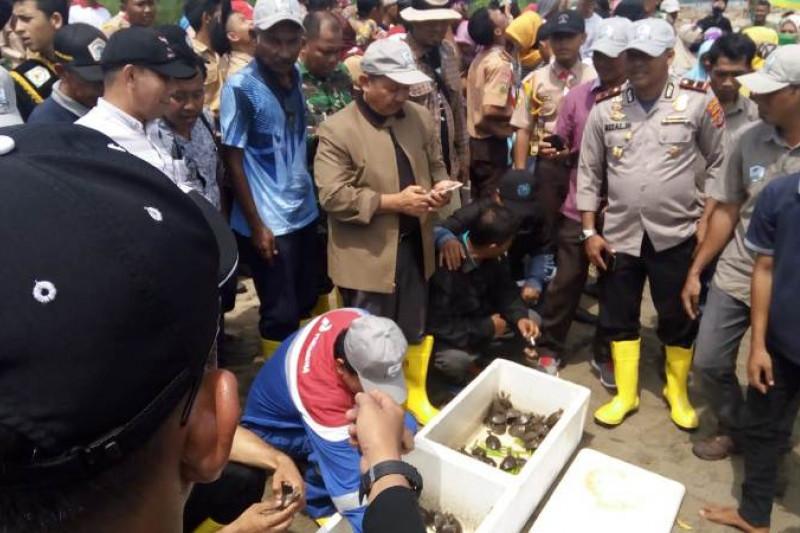 433 Tukik tuntong laut Aceh Tamiang dilepasliarkan
