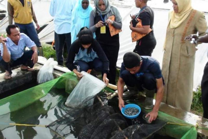 Harga ikan mas dan beras di Sukabumi turun