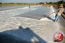 Harga garam tingkat petani Rp6.000/kilogram di Aceh