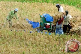 Produksi padi petani Aceh Barat meningkat