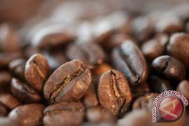 Ekspor kopi Gayo turun 39,03 persen