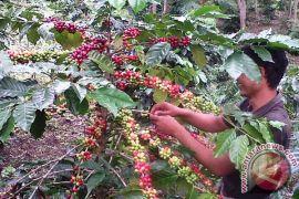 Aceh siap gelar festival panen kopi