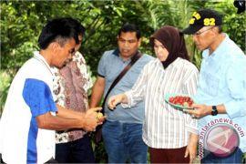 Forum Pala sesalkan tudingan mantan bupati