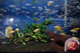 Bisnis Ikan Hias Menjanjikan di Lhokseumawe