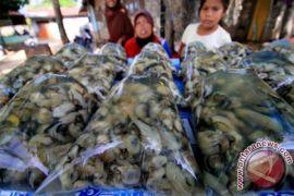 Pemkot Banda Aceh dukung modernisasi budidaya tiram masyarakat