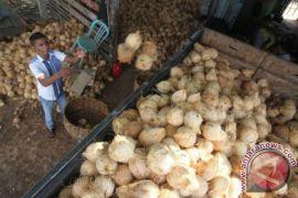 Harga buah kelapa di Aceh Utara anjlok