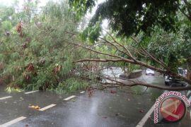 Seorang warga Nagan tewas tertimpa pohon