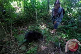 BKSDA Aceh lepas liarkan empat ekor primata
