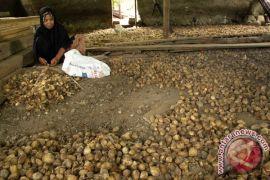 Harga pinang di Aceh Utara anjlok