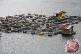 Budi daya ikan keramba berkembang di Lhokseumawe