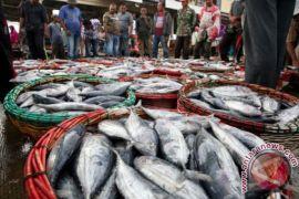 Produksi perikanan Aceh Barat 22 ribu ton