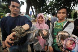 Edukasi Binatang Reptil