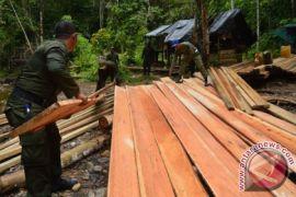 Polisi sita 30 ton kayu di Aceh Timur