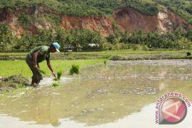 Petani Aceh Barat diserukan tanam serentak