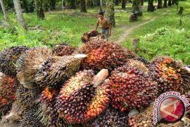 Presiden minta pengutan ekspor untuk bantu petani sawit