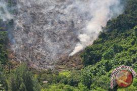 Ribuan hektare hutan dirambah di Aceh