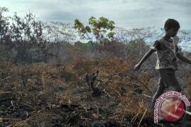 Lahan gambut terbakar di Aceh Barat telah padam