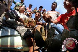 Lanal Lhokseumawe tangkap penyelundup hewan dilindungi