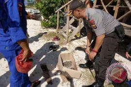 Polisi amankan tanaman ganja di Pulau Banyak