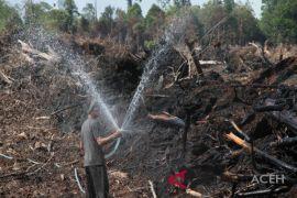50 hektare hutan pinus terbakar di Aceh Besar