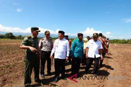 Aceh Besar kembangkan jagung seluas 2.700 hektare