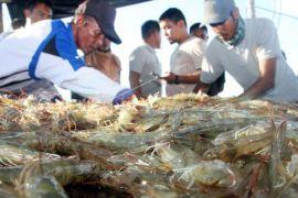 Harga udang bergerak naik di Banda Aceh