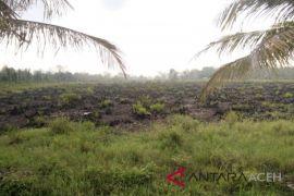 Kejaksaan ancam DPO terpidana pembakaran lahan PT SPS