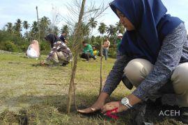 Mifa tanam 300 pohon di Aceh Barat