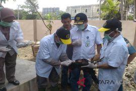 Bea Cukai Aceh musnahkan puluhan ayam selundupan
