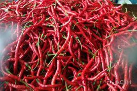 Harga cabai merah di Aceh Besar naik Rp10.000/kg