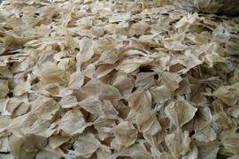 BI Lhokseumawe bina kelompok pengrajin ikan asin