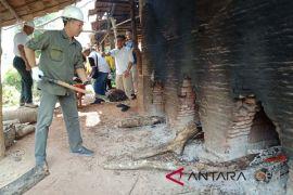 Thailand jajaki investasi ekspor cangkang kelapa sawit